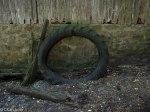 Mossy Tire